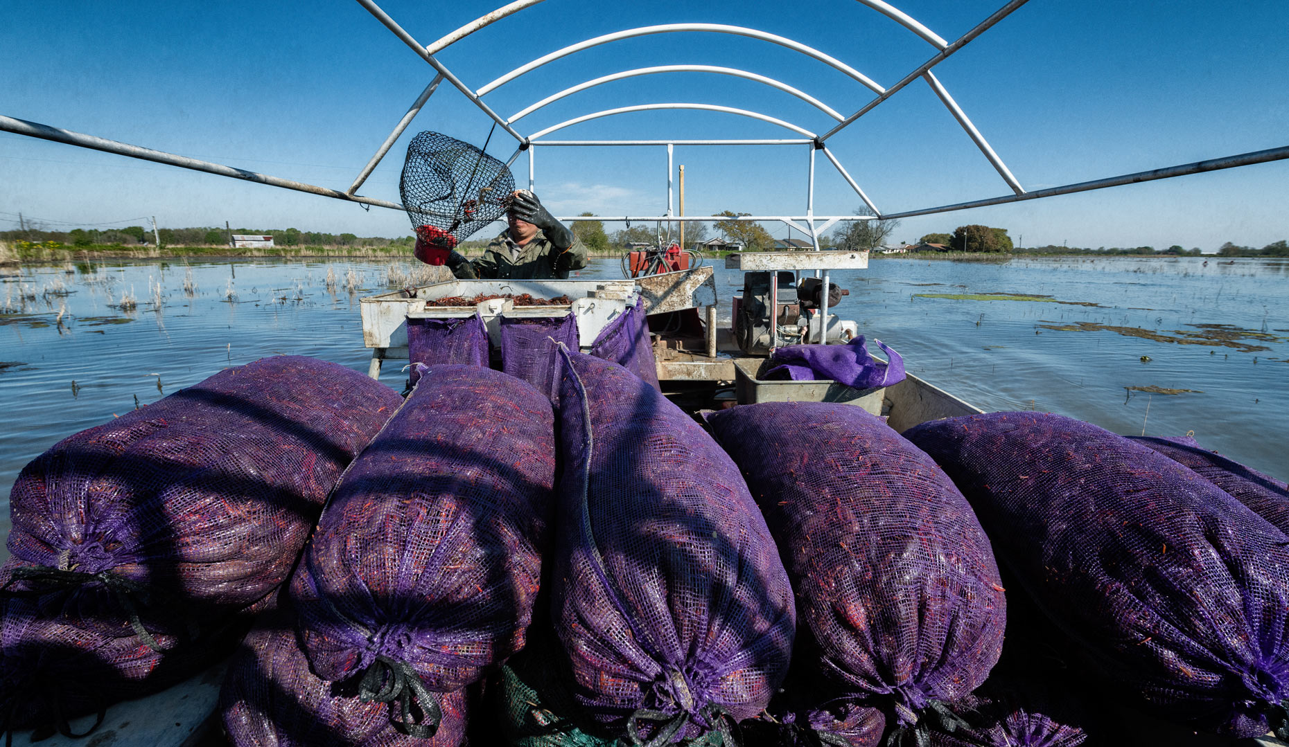 Fruge´ Crawfish Farm near Branch, LA by editorial photographer Kevin Brown.